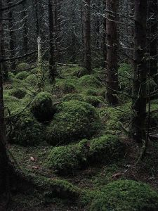 450px-A_dark_forest_-_geograph_org_uk_-_901640