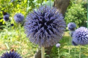 Blue Photo: Norma Scheibe