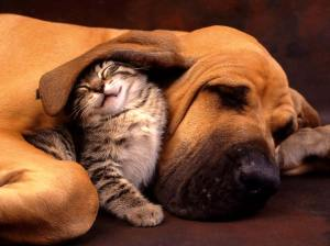 Cat_and_Dog_-_the_Best_Friend