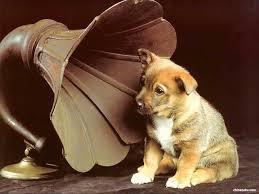 dog gramaphone