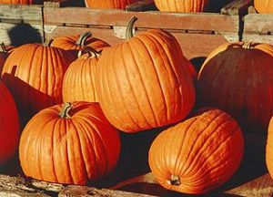 You could see the pumpkin in the picture too. Canadian pumpkins Martin Doege