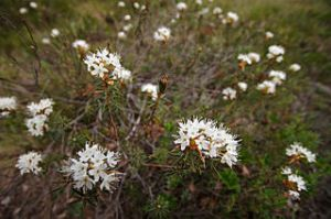 Photo: Miika Silfverberg Wikipedia.org