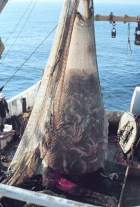 Trawl Net U.S. National Oceanic and Atmospheric Administration,  Wikimedia Commons