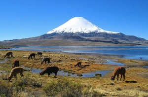 Parinacota volcano, Chile Photo: mtchm  Creative Commons