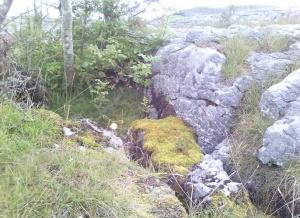 moss and burren