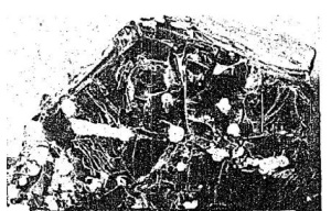 Fragment from G.P.O. Image: Connacht Tribune