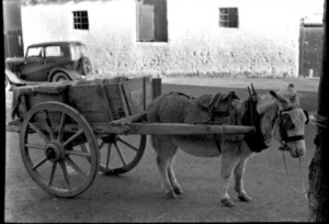 Donkey and Cart, Kinvara c.1950 Cresswell Archives