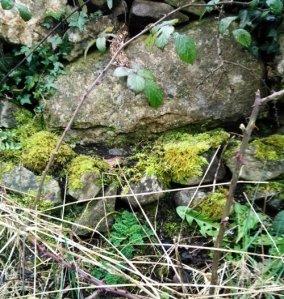 BurrenWall