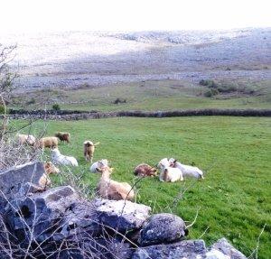 Burren beauties Photo: EO'D